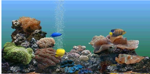 SereneScreen Marine Aquarium 是著名的热带鱼水族箱屏幕保护程序(其前身是 Sachs Marine Aquarium ),它屡获软件大奖,在许多的软件下载网站的排行榜中也名列前茅,甚至此屏保还被微软收入其 WinXP Plus Pack 之中。