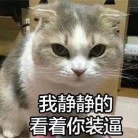 斗图必备!瓜皮猫带字搞笑表情包