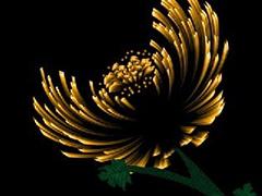 用PS滤镜制作抽象菊花设计图