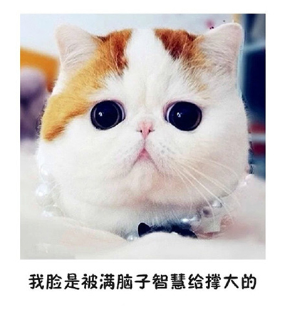 微信表情意思:如果有人说你脸大_其它聊天图片猫咪代表表情包qq图片