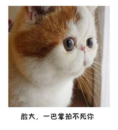 微信猫咪表情包:如果有人说你脸大