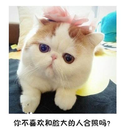 微信猫咪表情包:如果有人说你脸大图片