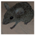 模拟老鼠修改器