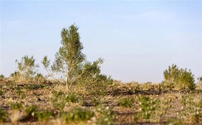 支付宝蚂蚁森林的能量树什么时候能种上真树?