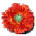 Free Image Converter(图片大小转换调整) V0.8 绿色英文版