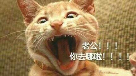 喊老公表情包小猫系列