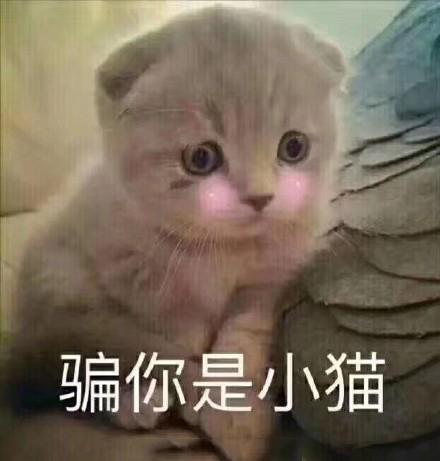 热门的猫咪表情包16P