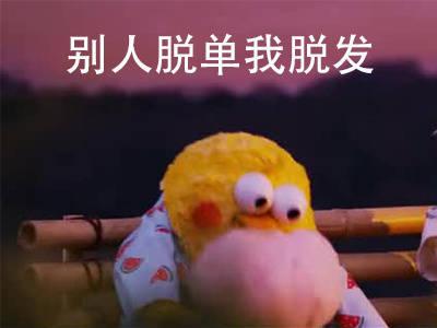 句句扎心的鹦鹉兄弟表情包