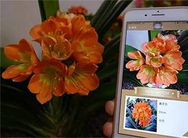 拍照识别植物的软件有哪一些?6款拍照识别植物软件推荐