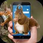 松鼠恶作剧 V2.0.0 for Android安卓版