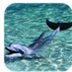 九宫海豚锁屏 V1.0 for Android安卓版