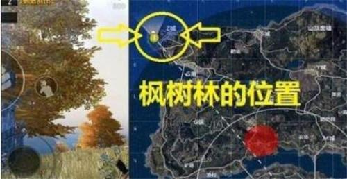 刺激战场绝地海岛野餐聚点位置在哪?