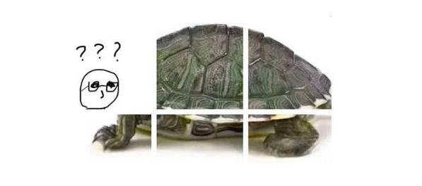抖音很火的乌龟六张图怎么玩?