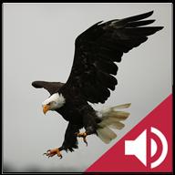 鸟声音 V4.4 for Android安卓版