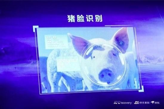 京东猪脸识别